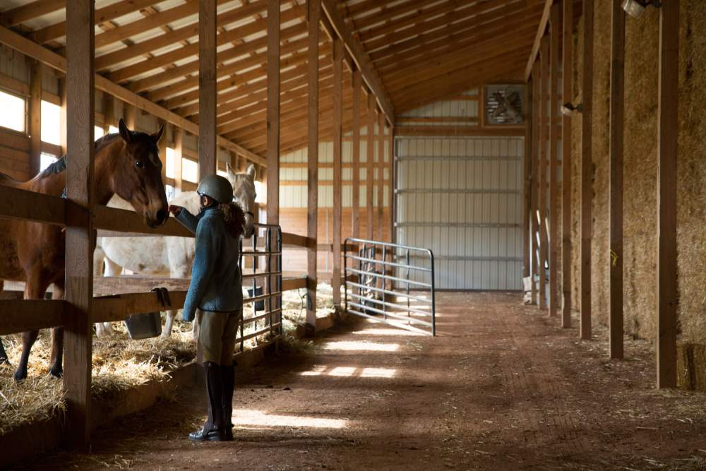 Two Horses And A Horse Rider Inside An Equestrian Farm