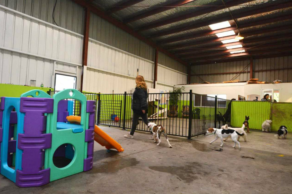 Commercial Dog Kennels with several dogs.